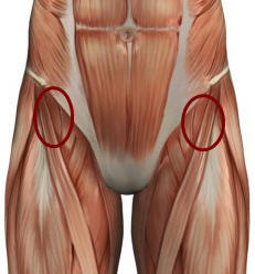 illustration of hip flexors